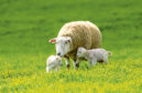 Health scheme members will not have their flock MV tested during the Covid-19 outbreak.