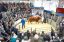 Harrison and Hetherington will operate online auctions for pedigree livestock during the coronavirus pandemic.