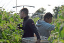 HMRC is allowing furloughed workers to take up temporary well-paid employment in polytunnels and on vegetable farms.