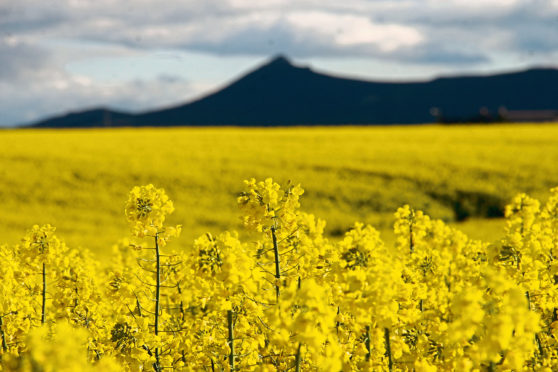 Crop growers in Scotland will still be able to export as usual this summer to EU countries.