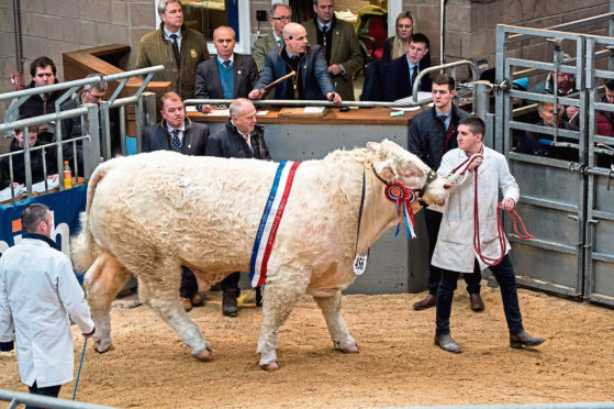 The May Stirling Bull Sales has been cancelled and UA will directly market bulls instead.