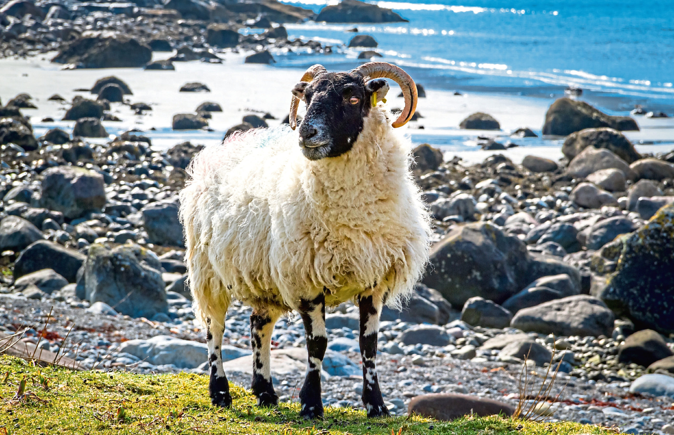 The Scottish Crofting Federation says its members are feeling the impact of the current lockdown.