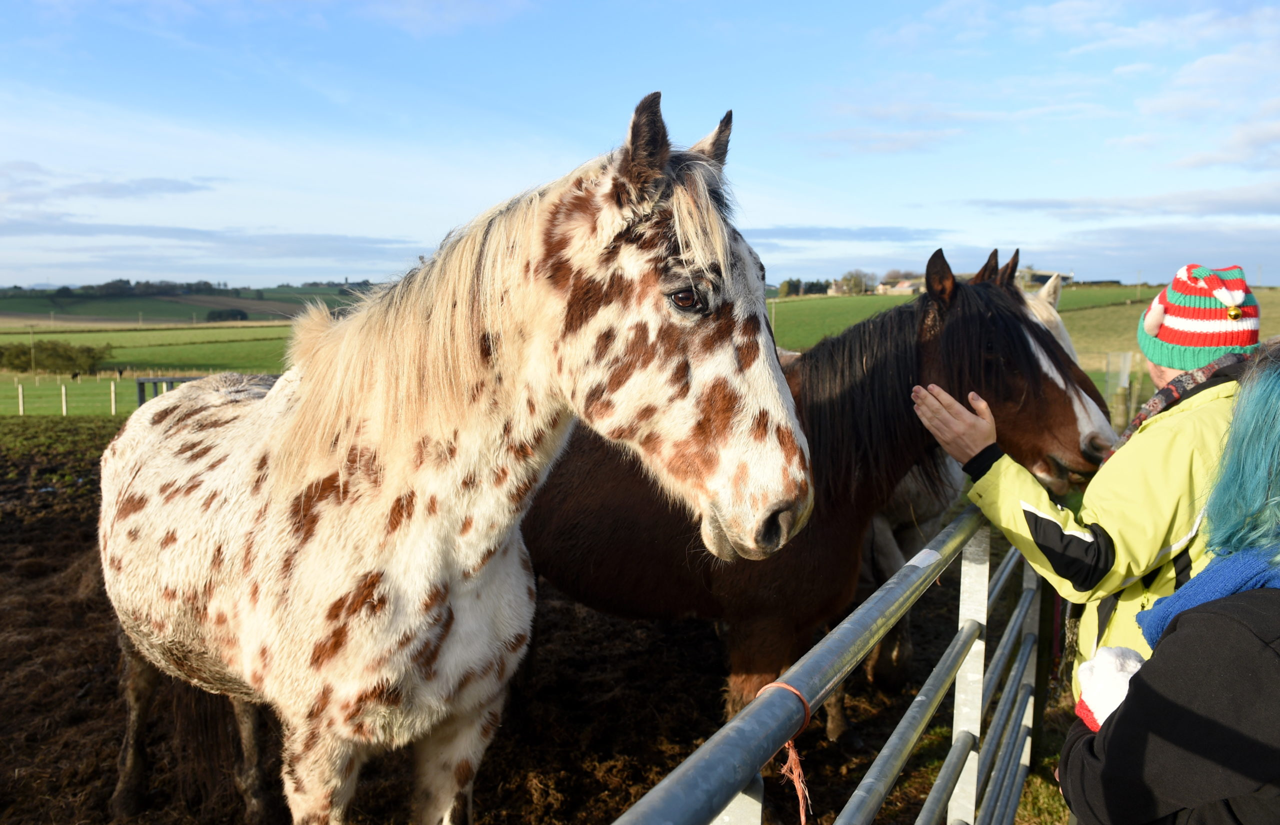 Horses at New Arc near Ellon