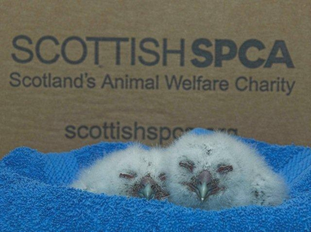 The society's animal helpline took over 10,000 calls relating to baby birds last year