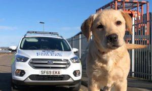 Trainee police dog, Charlie.