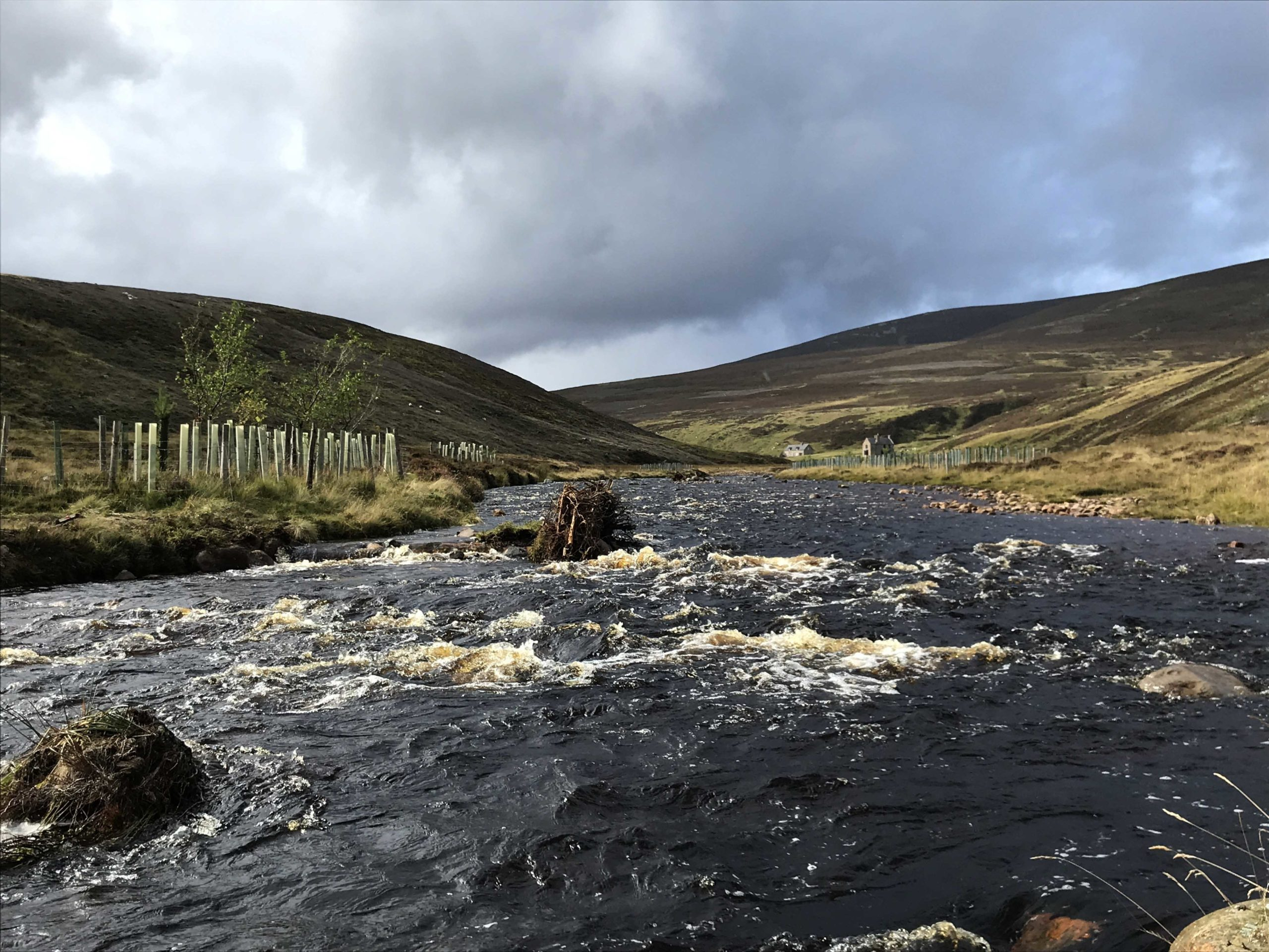 Tree-planting in the upper River Dee catchment