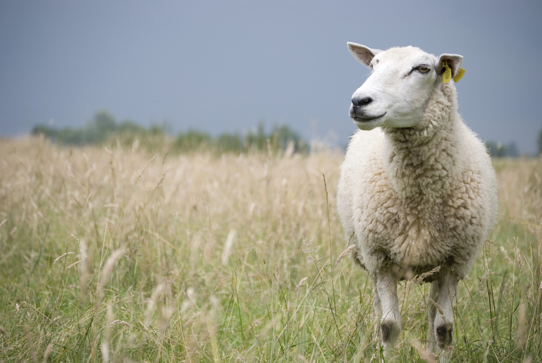Landlords are urged to delay spring farm rent reviews.