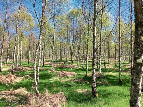 Broadleaved woodlands can be an undervalued resource on farms and estates.
