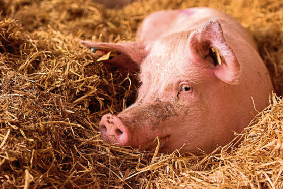 Retailers are being asked to stock more British and Scottish pork in light of the industry's response to the pandemic.
