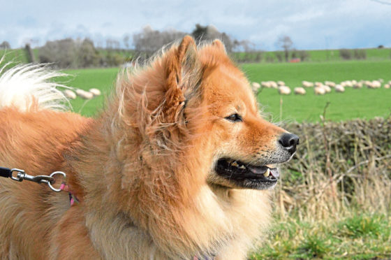Campaigners want the new bill to be a catalyst for public education about the importance of having dogs under control when near livestock.