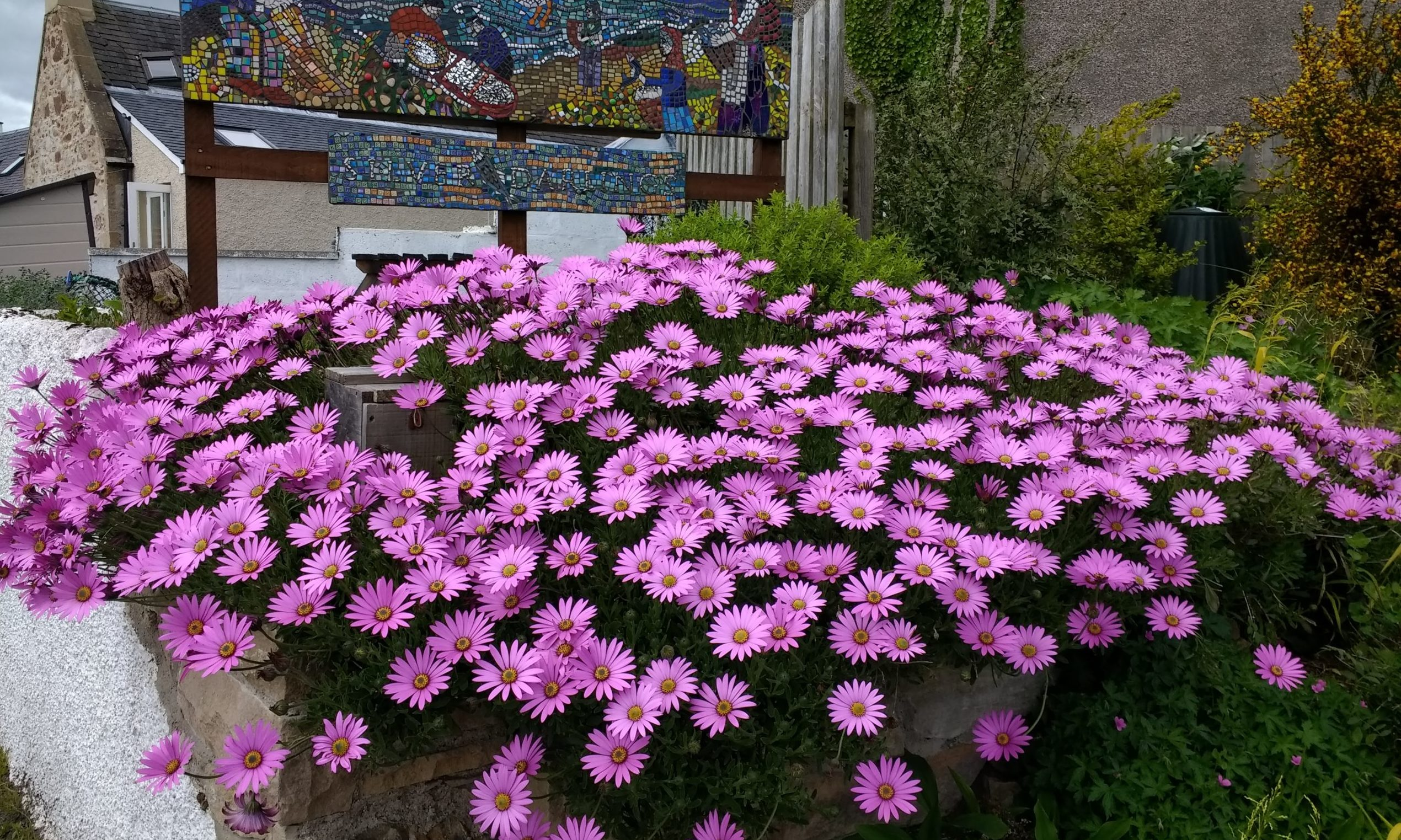 General photograph of flowers in a garden.
