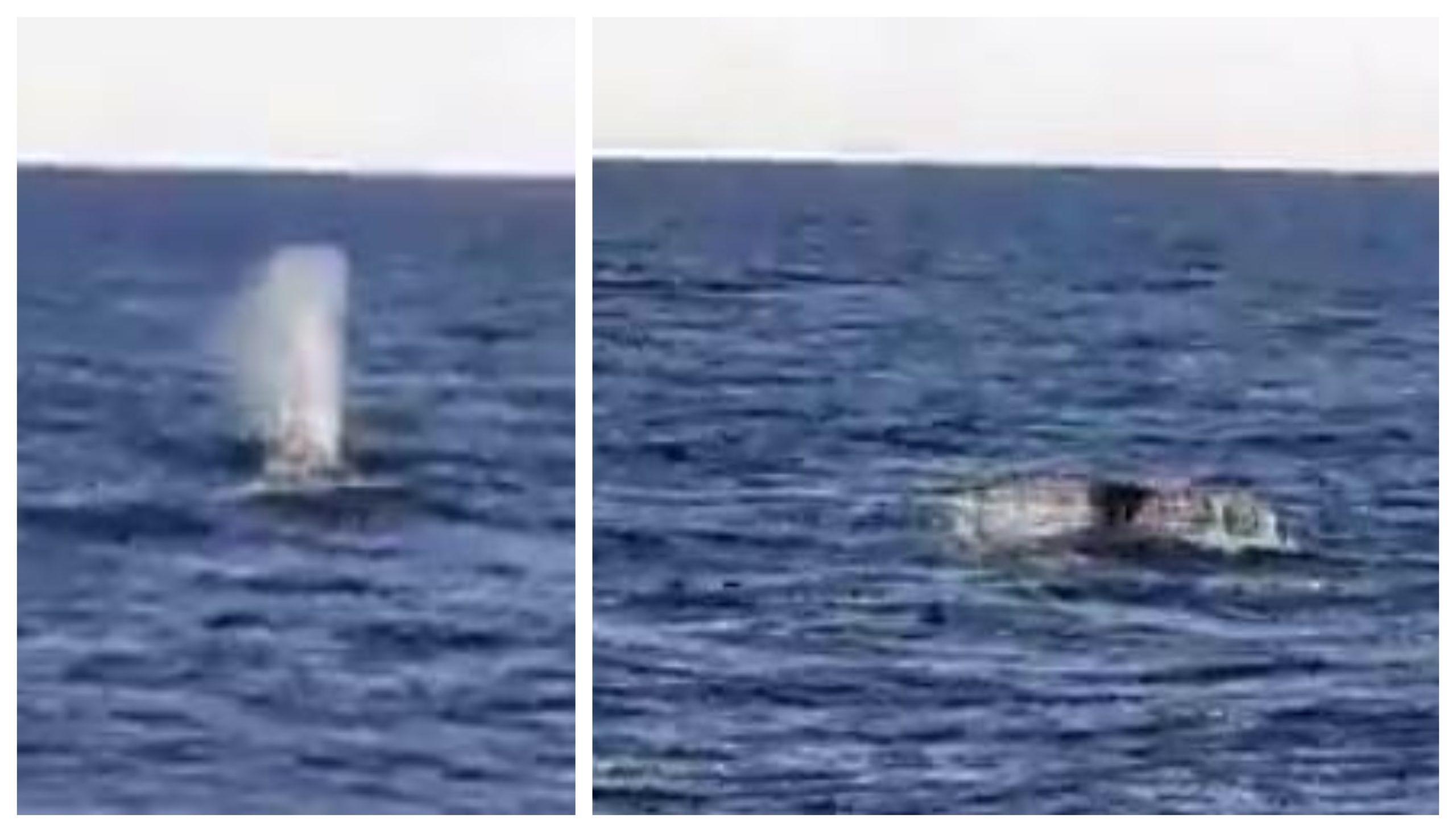 The Humpback whale spotted off the Aberdeen coastline.