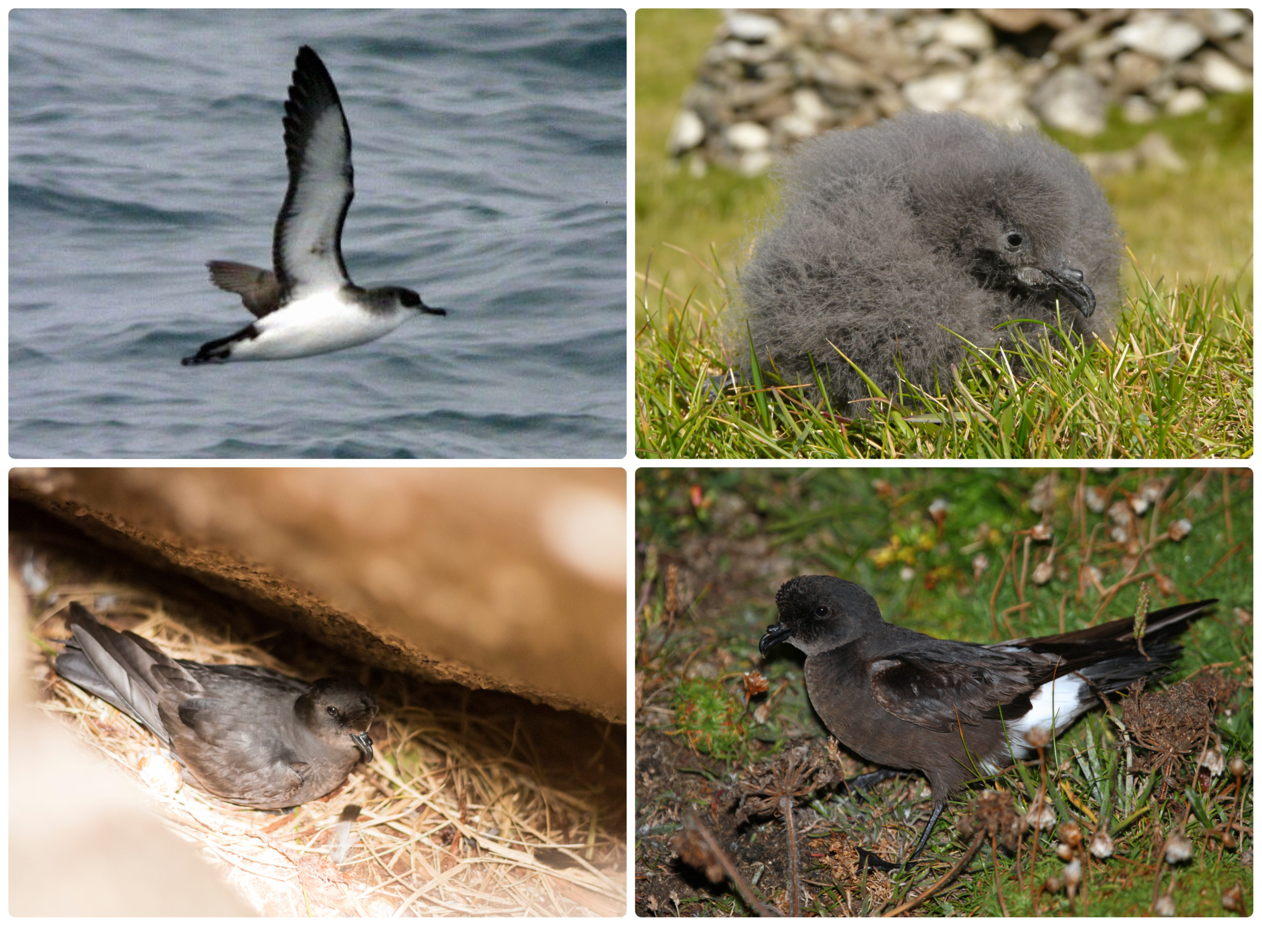 Sea birds on the west coast of Scotland will be monitored under the project