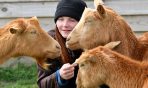 Alice Lennox on the farm with Golden Guernsey Goats.        Pictures by Kami Thomson