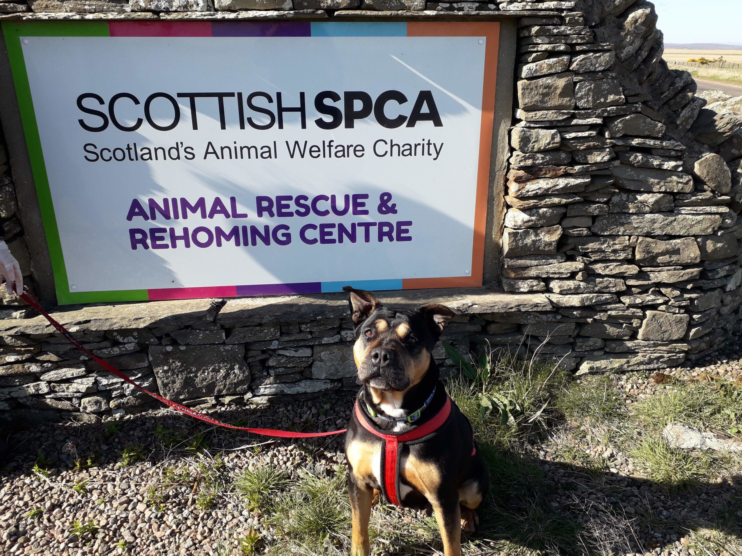 Scylla at the charity's Caithness and Sutherland Animal Rescue and Rehoming Centre.