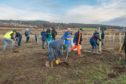 Volunteers at the park plant trees in 2019