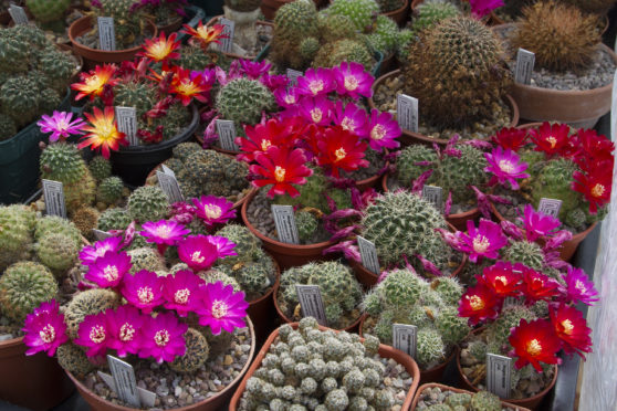 Paul Doyle has spent 25 years building one of the UK's most impressive collections of cacti in his back garden in Collieston.