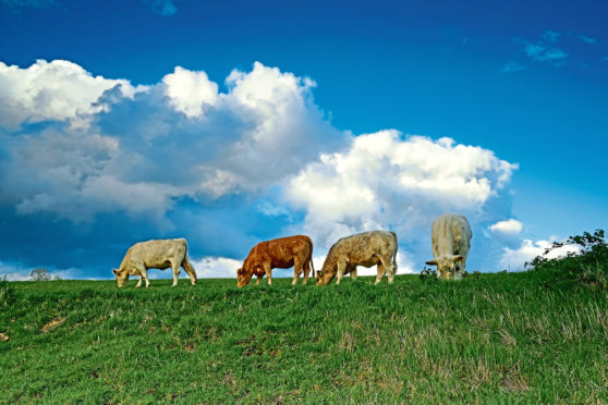 Scientists say the climate impact of grass-fed cattle herds may have been overestimated.