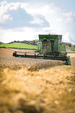 Scotland fared better than the rest of the UK, with the wheat area only down 11%.