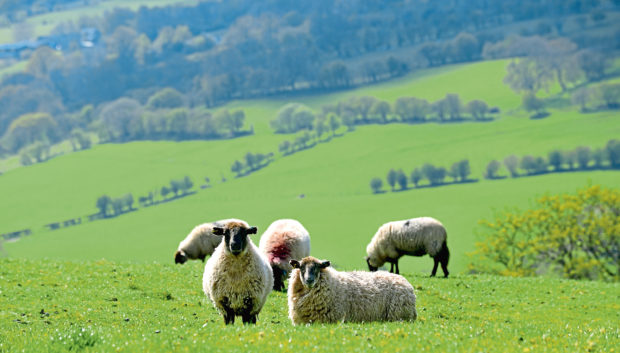 The SNP warns the plans are a threat to the farming sector.
