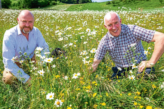 Alexander Moncrieff, left, and head of estates, Gordon Fowler, examine the growth and development of the wild flowers.