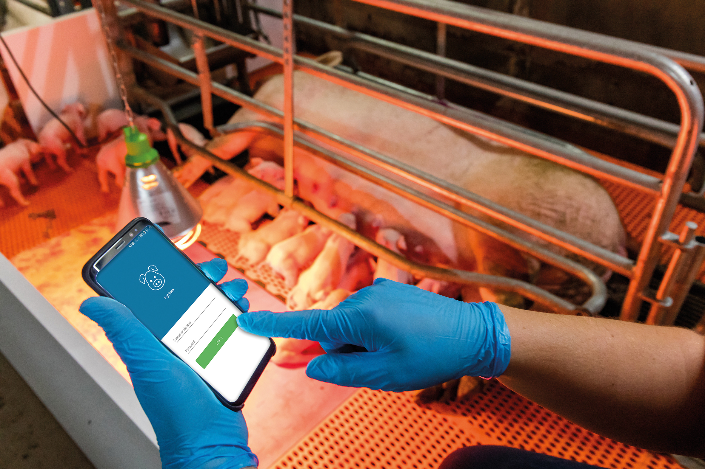 Pig farmers will be able to use mobile phone apps to record breeding and feeding herd data.