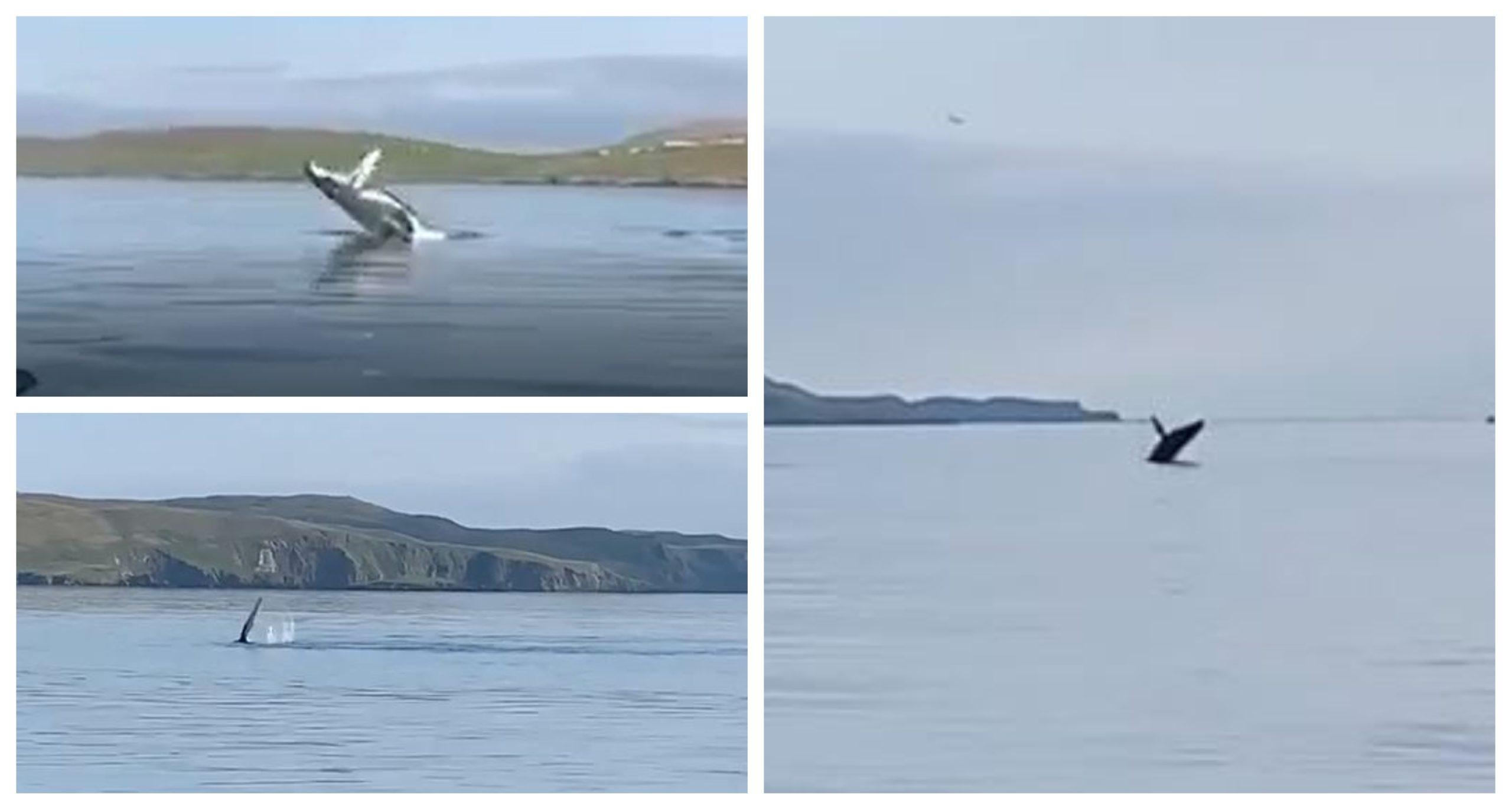 Screenshots of the humpback whale spotted near Shetland.