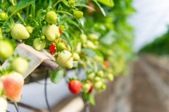 The group has put forward proposals for a new organisations for the horticulture and potato sectors.