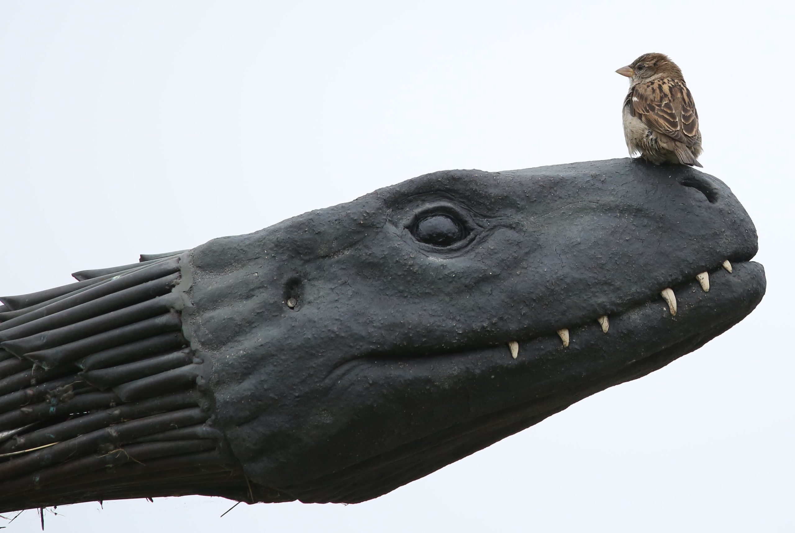 The sparrows' nest in the Loch Ness Monster head