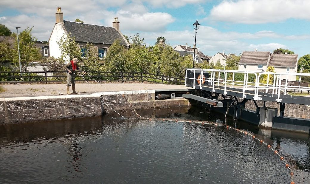 Trapped salmon smolt are being netted at Muirtown Lock in order to be released into the River Ness to continue their journey to the sea