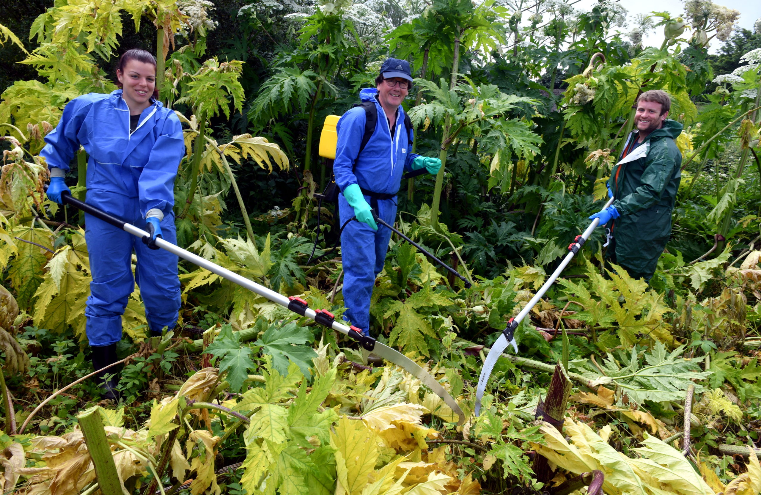 The Findhorn Nairn and Lossie Fisheries Trust is battling overgrown hogweed after its efforts to control the plant were hit by the coronavirus lockdown. Pictured: Mirella Toth, seasons operative officer, Bob Laughton, director of Findhorn Nairn and Lossie Fisheries Trust and James Symonds, project officer. Picture by Chris Sumner.