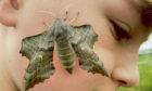 Noah Stevenson with the hawk moth.