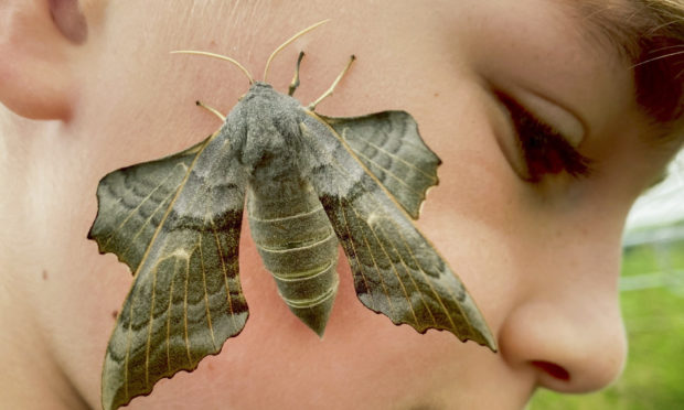 Noah Stevenson with the hawk moth.
