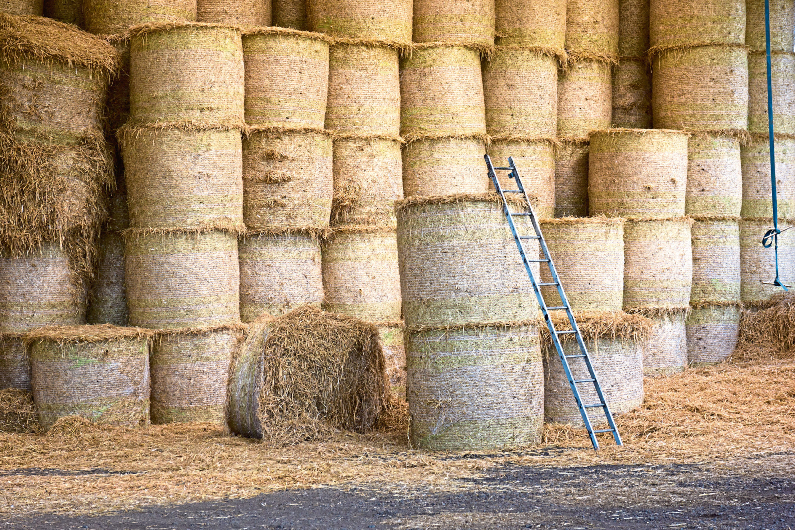ladder and hay bales in storage; Shutterstock ID 430982734; Purchase Order: -  Farm ladder bales - health and safety picture