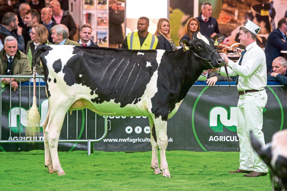 AgriScot usually features shows for dairy cattle, seminars and a host of trade stands.