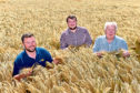 Steven Penrice, Andrew Murphy and David Murphy in their winning crop of Kingston winter barley.