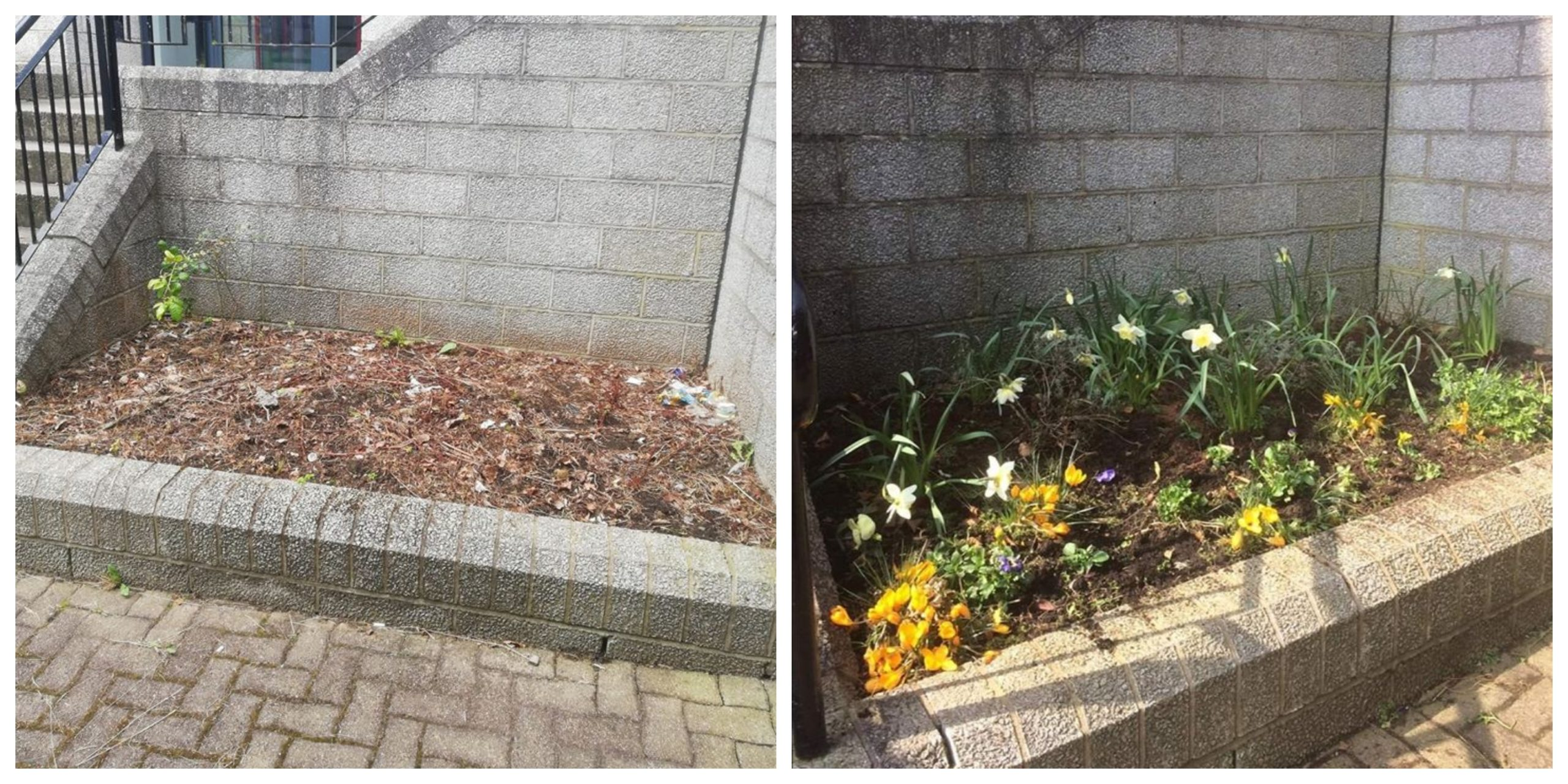A before and after of the garden at Fountain Grange.