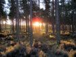 Culbin forest in Nairn