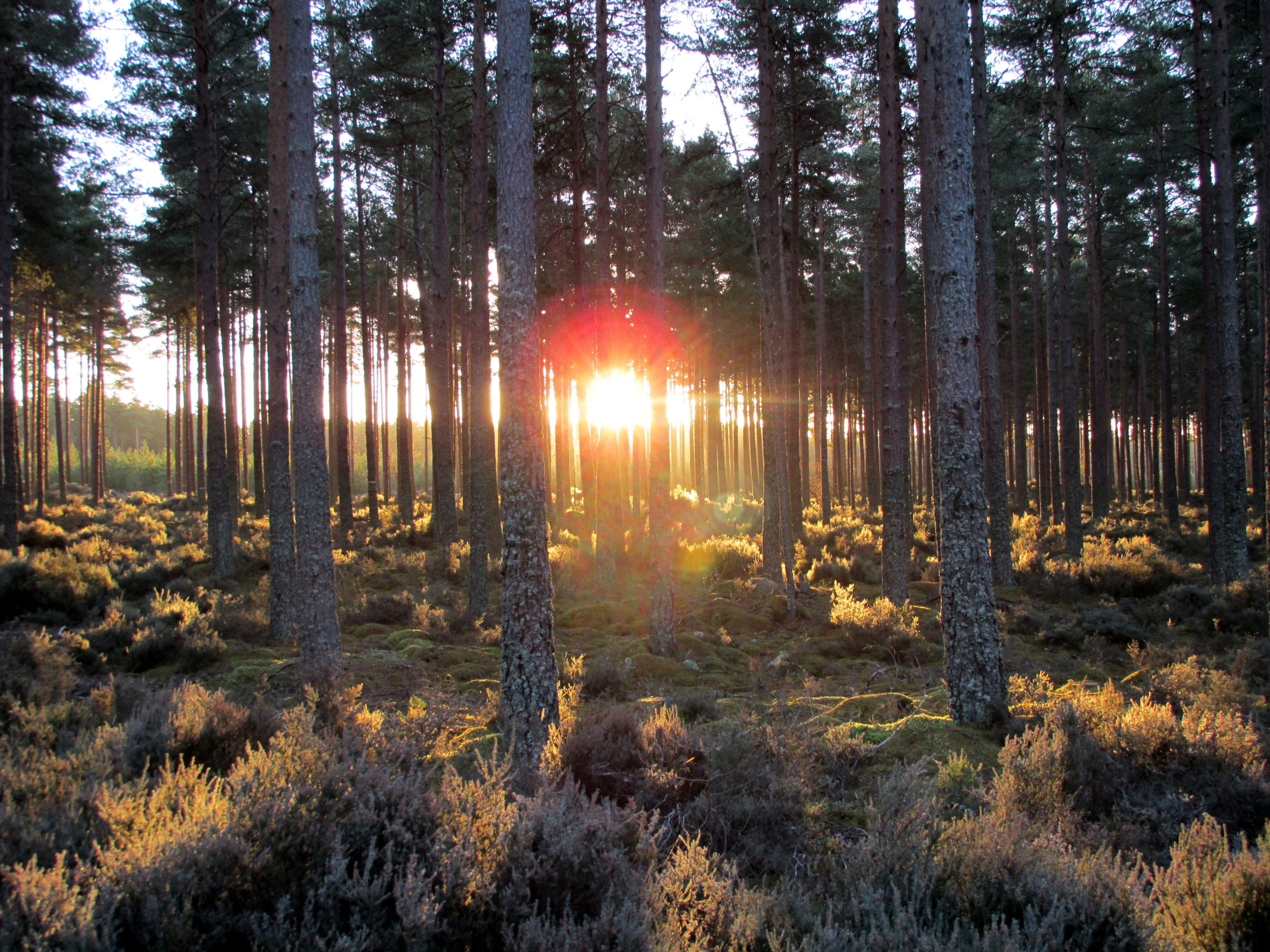 Culbin forest in Nairn