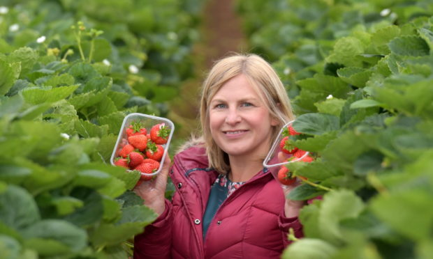 Anna Marshall pictured in the strawberry polytunnels at Castleton Fruit Farm, Fourdon, Laurencekirk.  Picture by KATH FLANNERY