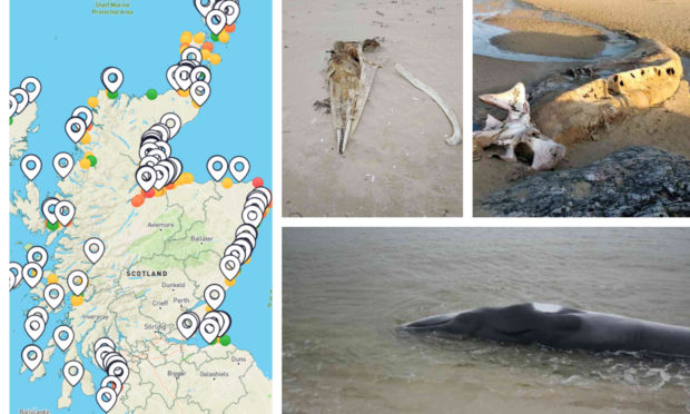 The app's results so far, left, and remains of whales discovered in Scottish beaches by its users