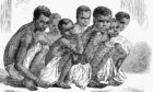 African slaves brought to Jamaica after their rescue by a British cruiser from a slave schooner off the coast of Cuba.