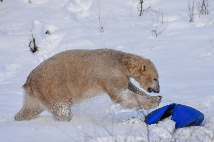 Hamish playing in the snow aged 11 months