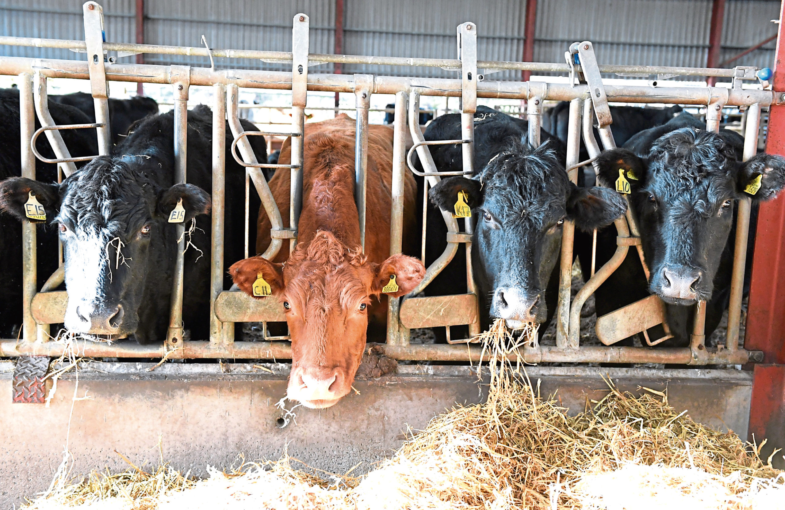 Scotland's livestock sector is becoming increasingly reliant on imported soya for animal feeds.