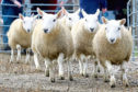 "Store lamb trade has ""started with confidence"" according to George Purves from United Auctions."