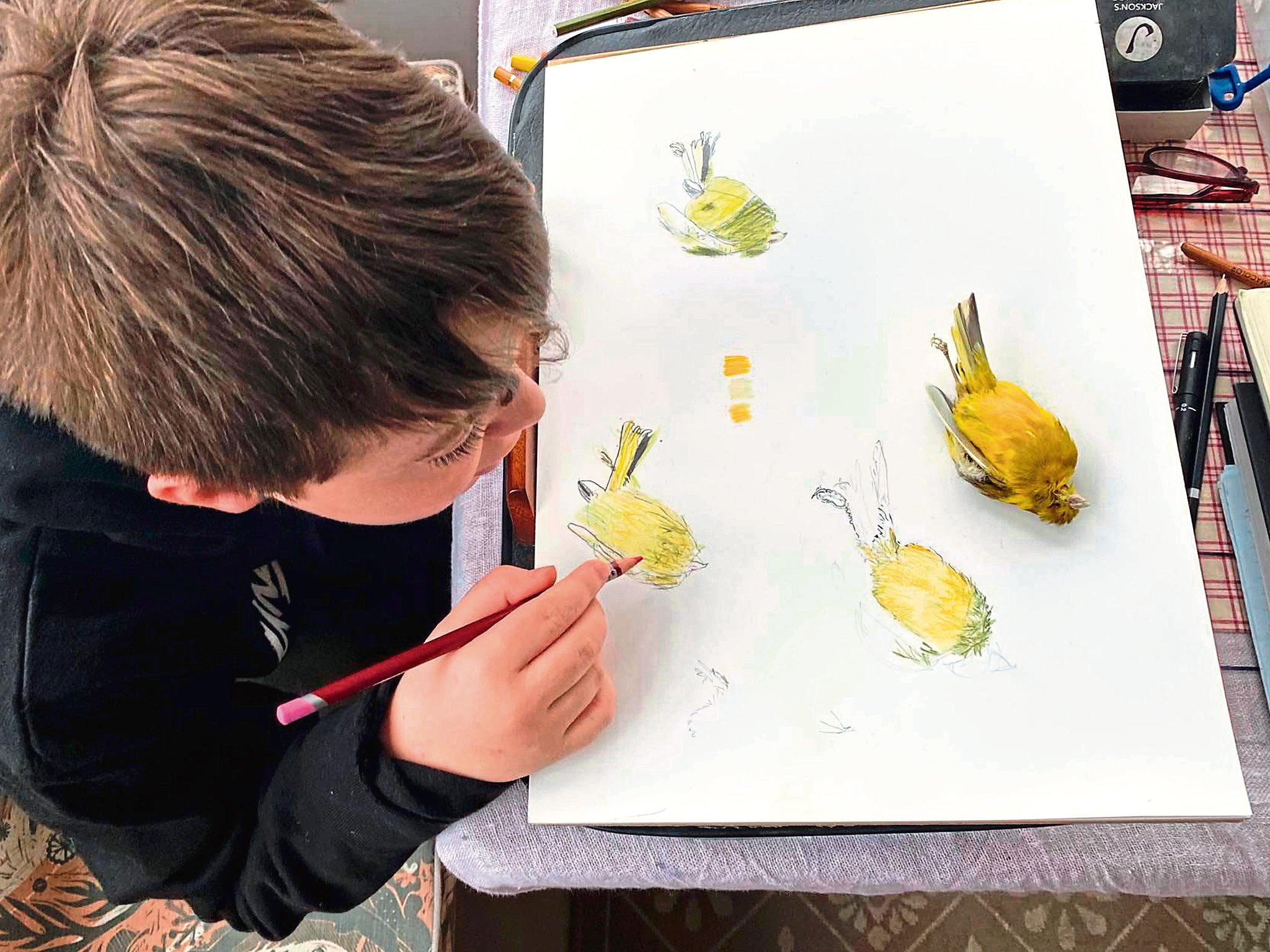 A young wildlife artist at work.