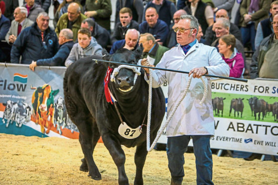 Exhibitors at this year's show will not be able to parade their animals around the ring.