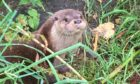 Bealltainn is currently being nursed back to health at the Otter Hospital on Skye