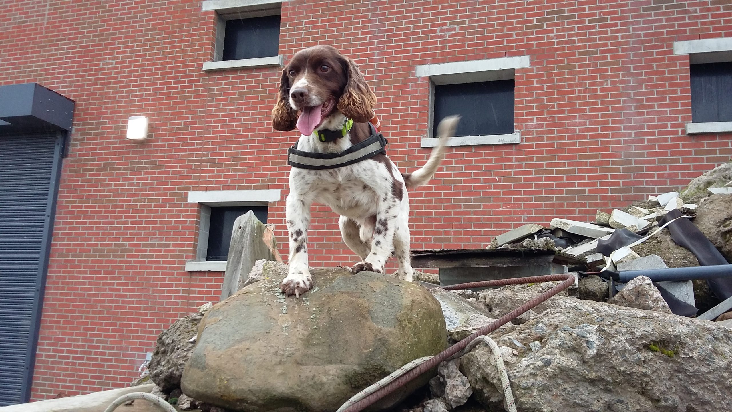 Diesel retires from the fire service after eight years.