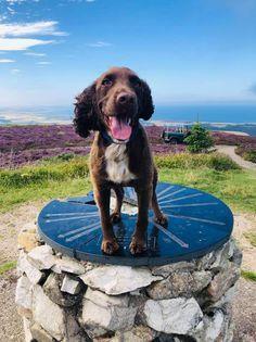 Fergus at the top of the Binn Hill.